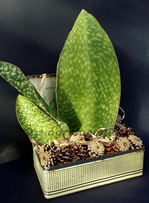 Creazioni natalizie semplici naturalmente con piante for Case di tronchi semplici